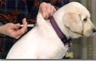 Kutya oltás